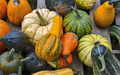 The Lowdown on the Great Autumn Gourd